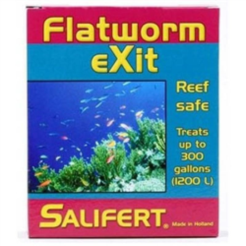 flatworm.jpg