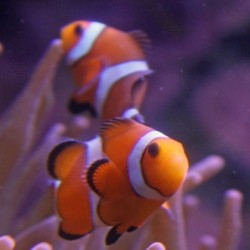 orange os 9-2-12.jpg